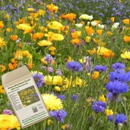 Amvista Buckingham Blooms Pure Wildflower Mix 100%