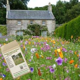 Amvista Clarence Low Height Pure Wildflower Mix 100%