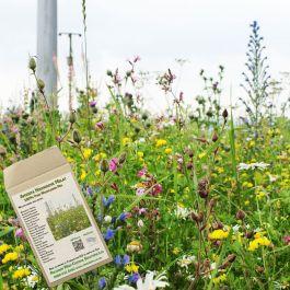 Amvista Highgrove Melay Pure Wildflower Mix 100%
