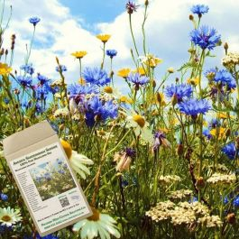 Amvista Sandringham Summer Pure Wildflower Mix 100%