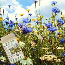 Amvista Sandringham Summer Grass & Wildflower Mix 80/20
