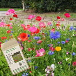 Amvista St James's Pure Wildflower Mix 100%