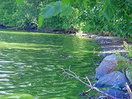 Aquatic Algae Control