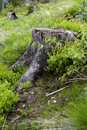 HOW TO GET RID OF TREE STUMPS & WOODY WEEDS