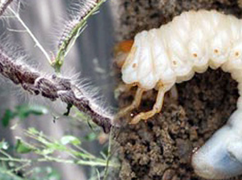 Dealing with Insects & Pests