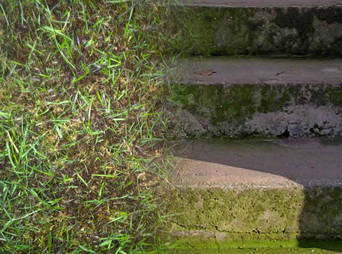 Dealing with Moss & Algae