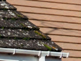 How to clean Moss on Roofs & Hard Surfaces