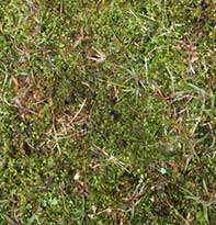 Controlling Moss in Grass
