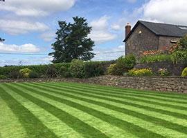 Lawns & Turf Fertiliser