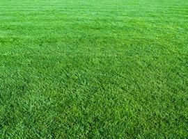 Lawns & Amenity