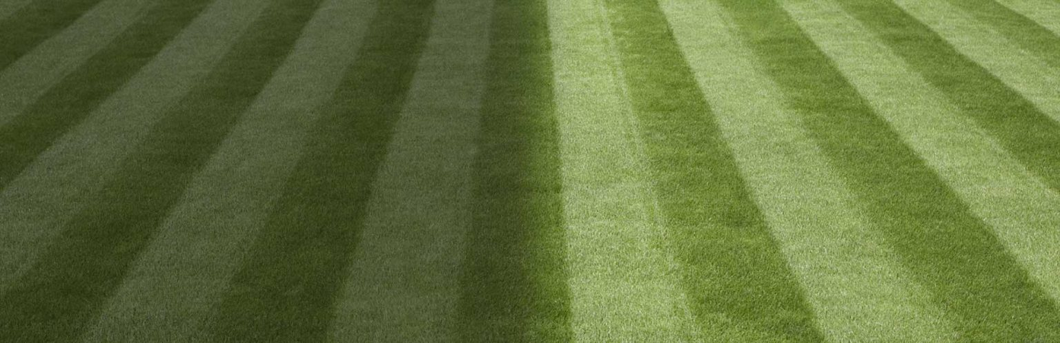 Autumn is a great time to rethink your lawn care